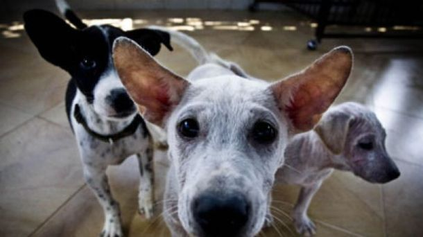Stop The Dog Meat Trade In Bali Animals World Animal Protection