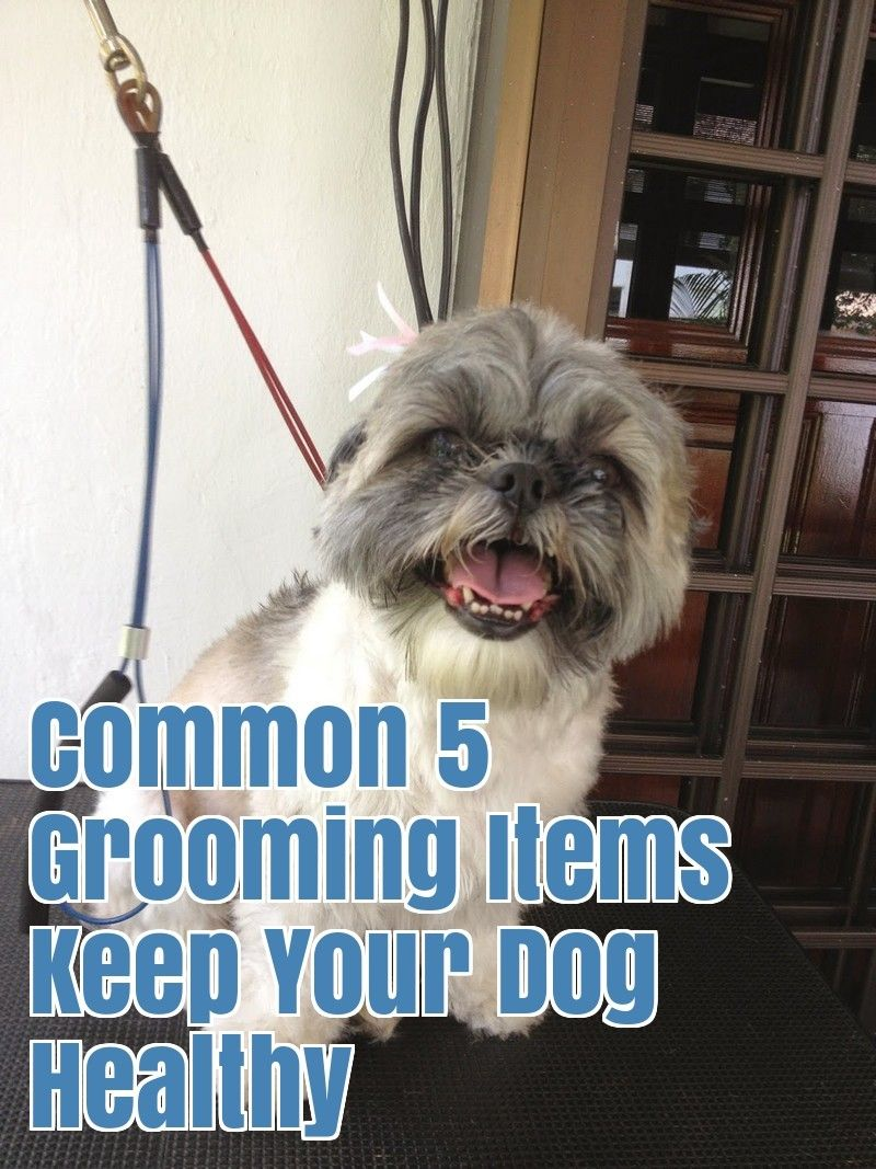 Most Preferred 5 Dog Grooming Tips Dog Grooming Tips Dogs Dog