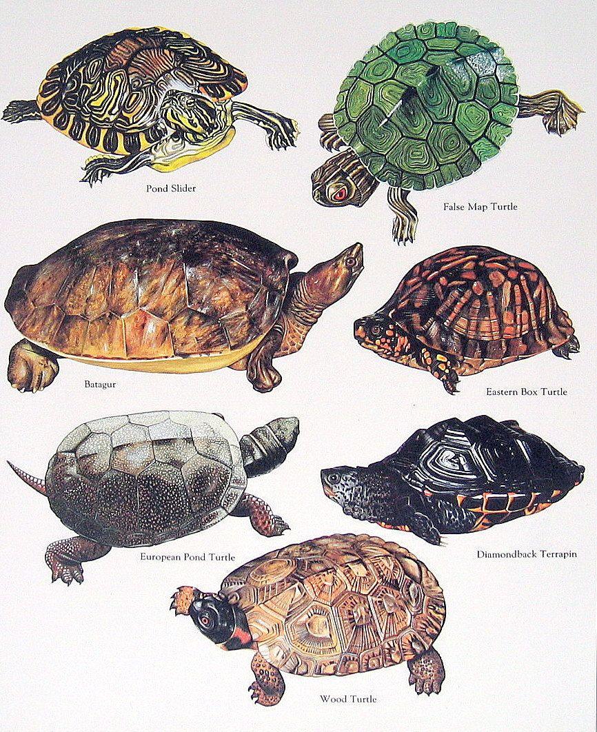 Turtles Pet Turtle Turtle Habitat Turtle