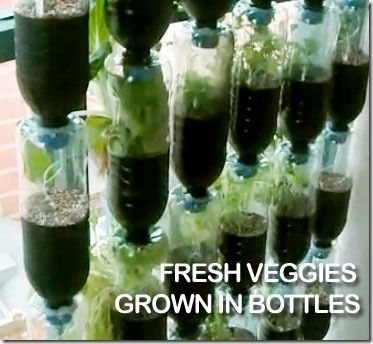Vertical Vegetable Gardening Ideas vertical vegetable garden ideas Explore These Ideas And More Recycled Plastic Bottles To Awesome Vertical Vegetable Garden