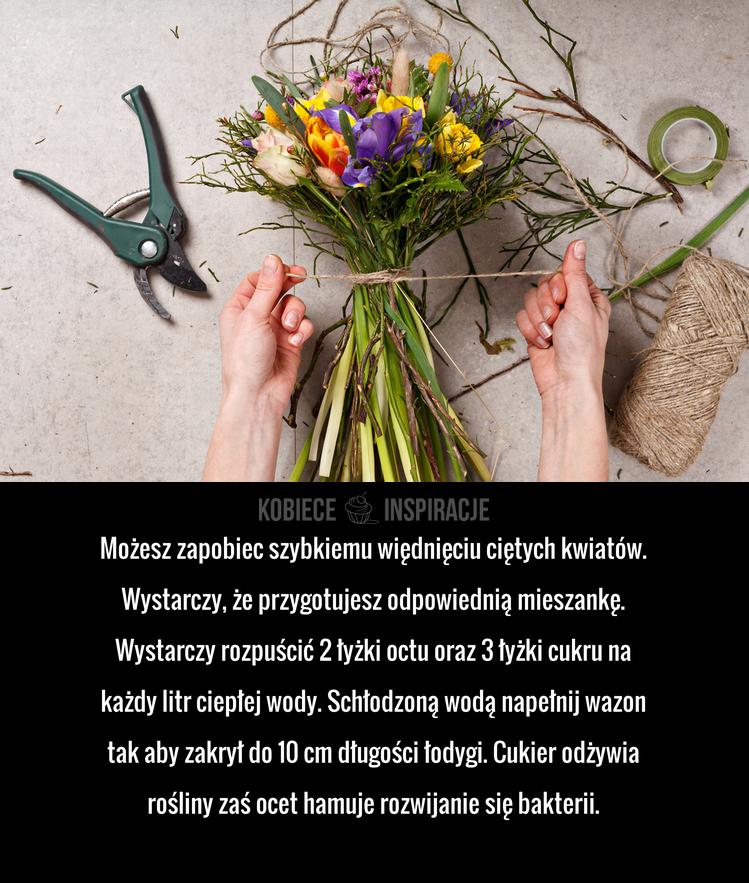 Co Zrobic Zeby Kwiaty Szybko Nie Zwiedly Plants Garden