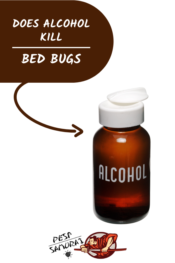 Alcohol for Bed Bugs Guide Does Alcohol Kill Bed Bugs