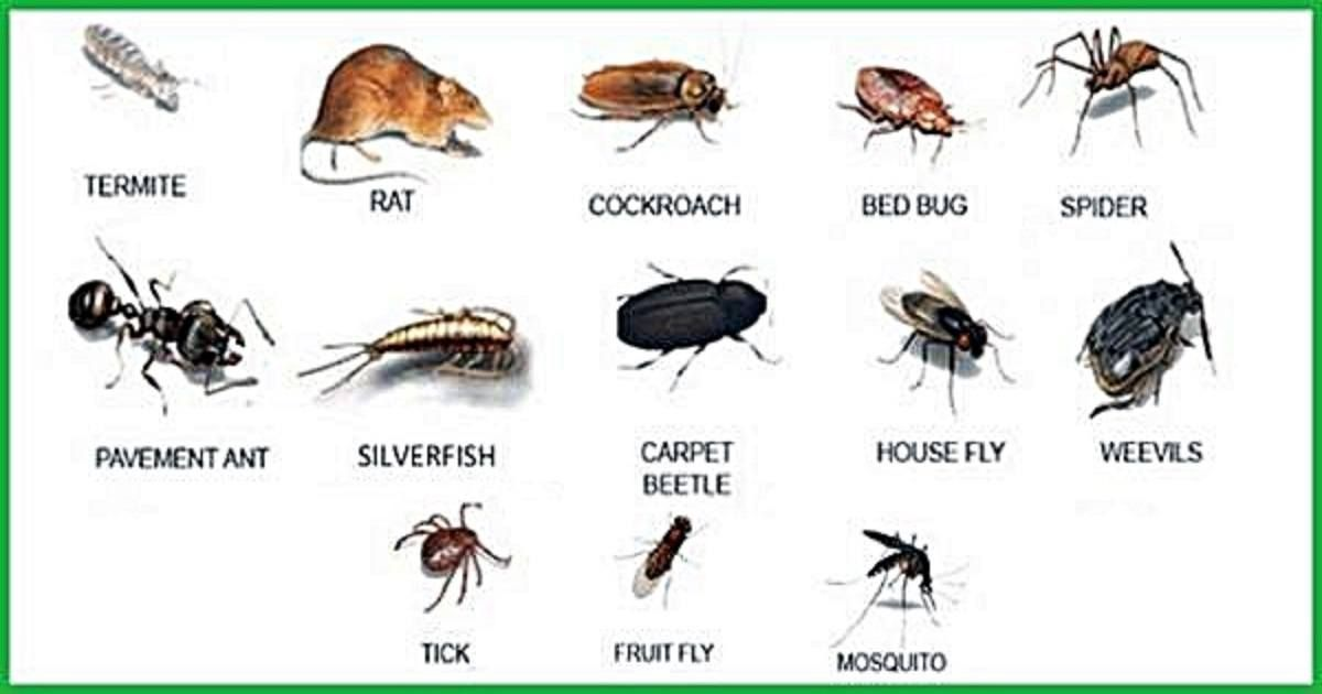 21 Simple Remedies To Make Your Home Pest Free Without Harmful
