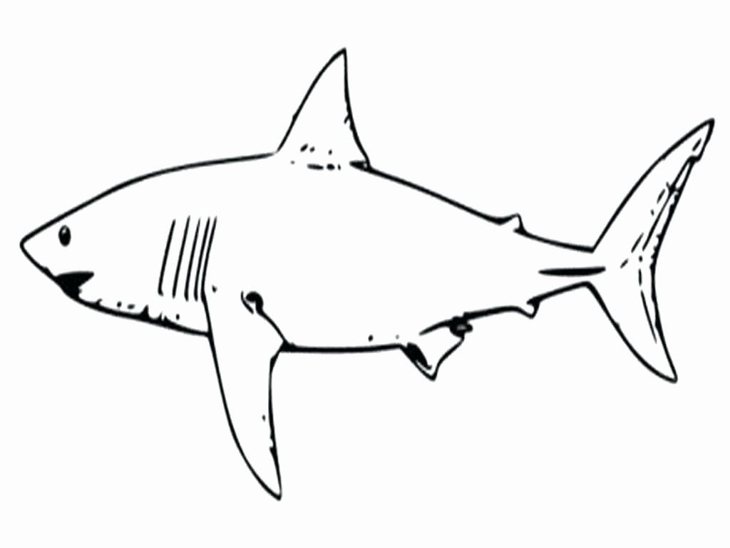 Scary Shark Coloring Pages Em 2020 Tatuagem Tubarao Tubarao