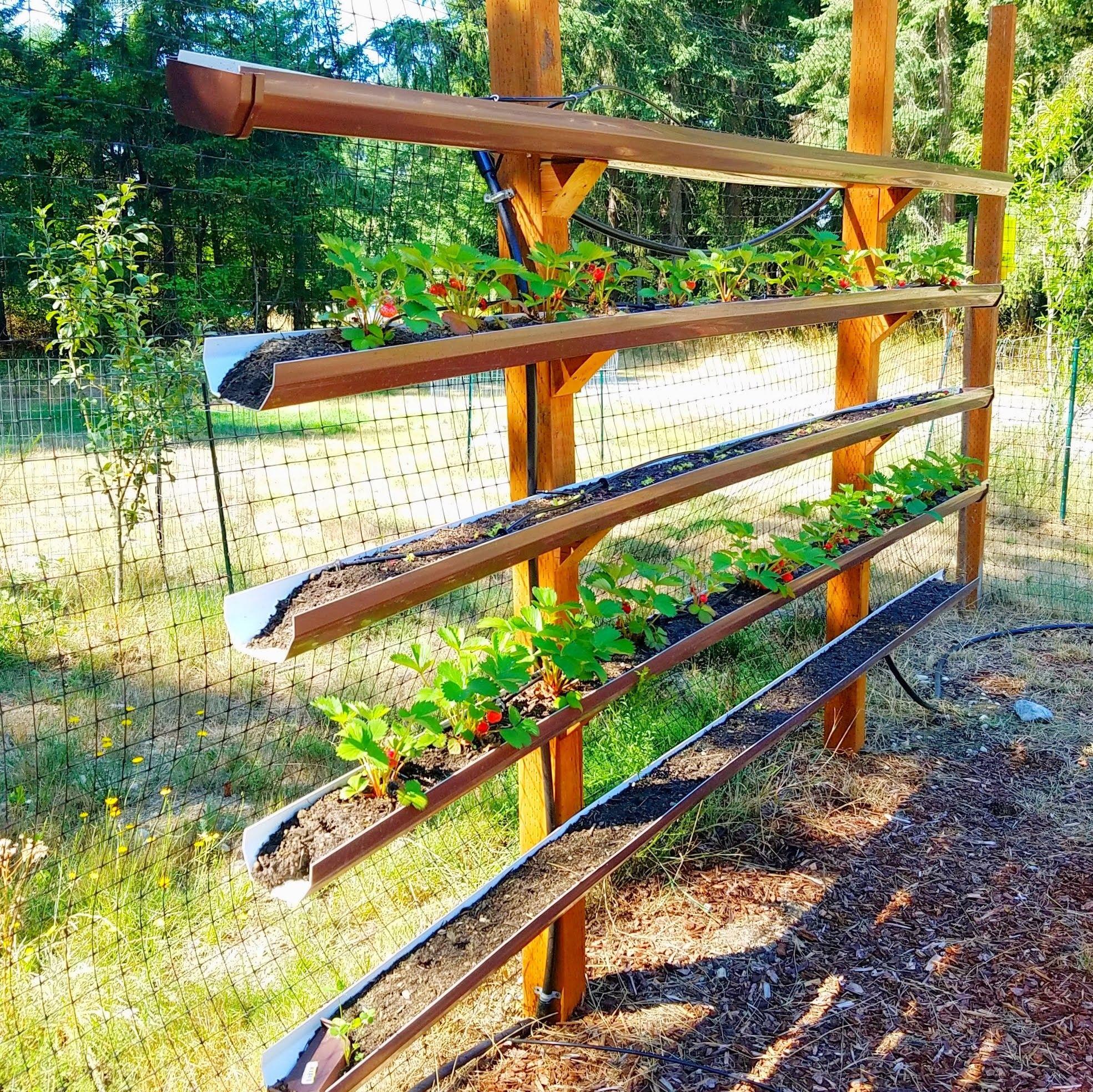 Rain Gutter Strawberry Beds Strawberry Beds Gutter Garden Garden Design