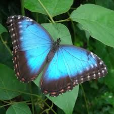 Pictures Of Butterflies Google Search Traumdeutung Schmetterling Tiere