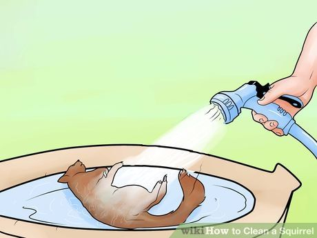 How To Clean A Squirrel Squirrel Hunting Squirrel Raising Rabbits