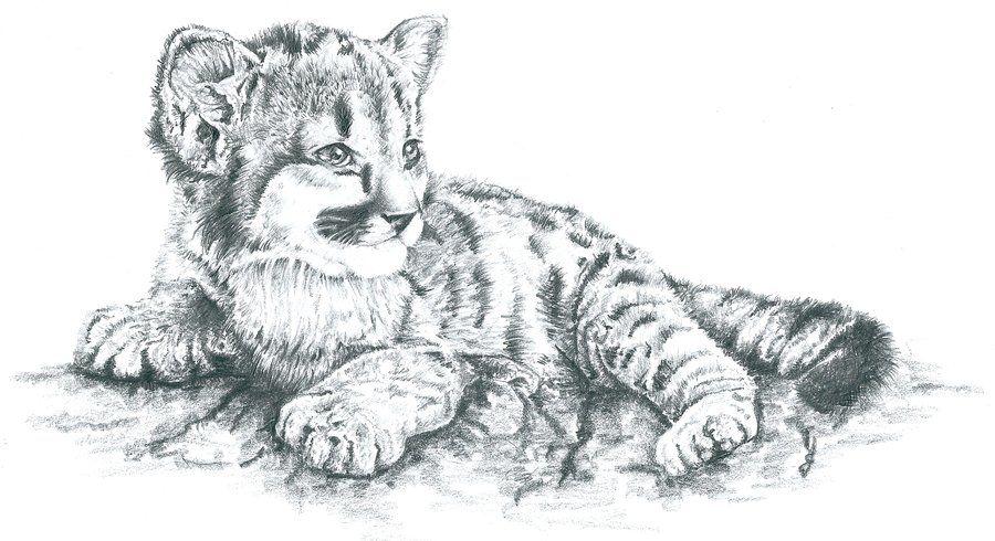 fcc564fcc sleeping lion cub drawing - Google Search   pj martin   Sleeping ...