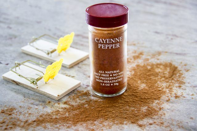 Does cayenne pepper get rid of mice cayenne peppers and mice does cayenne pepper get rid of mice ccuart Gallery