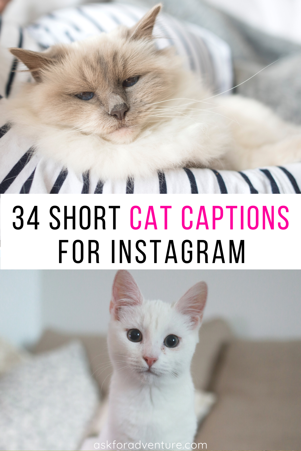 34 Short Cat Captions for Instagram Pictures of Cute
