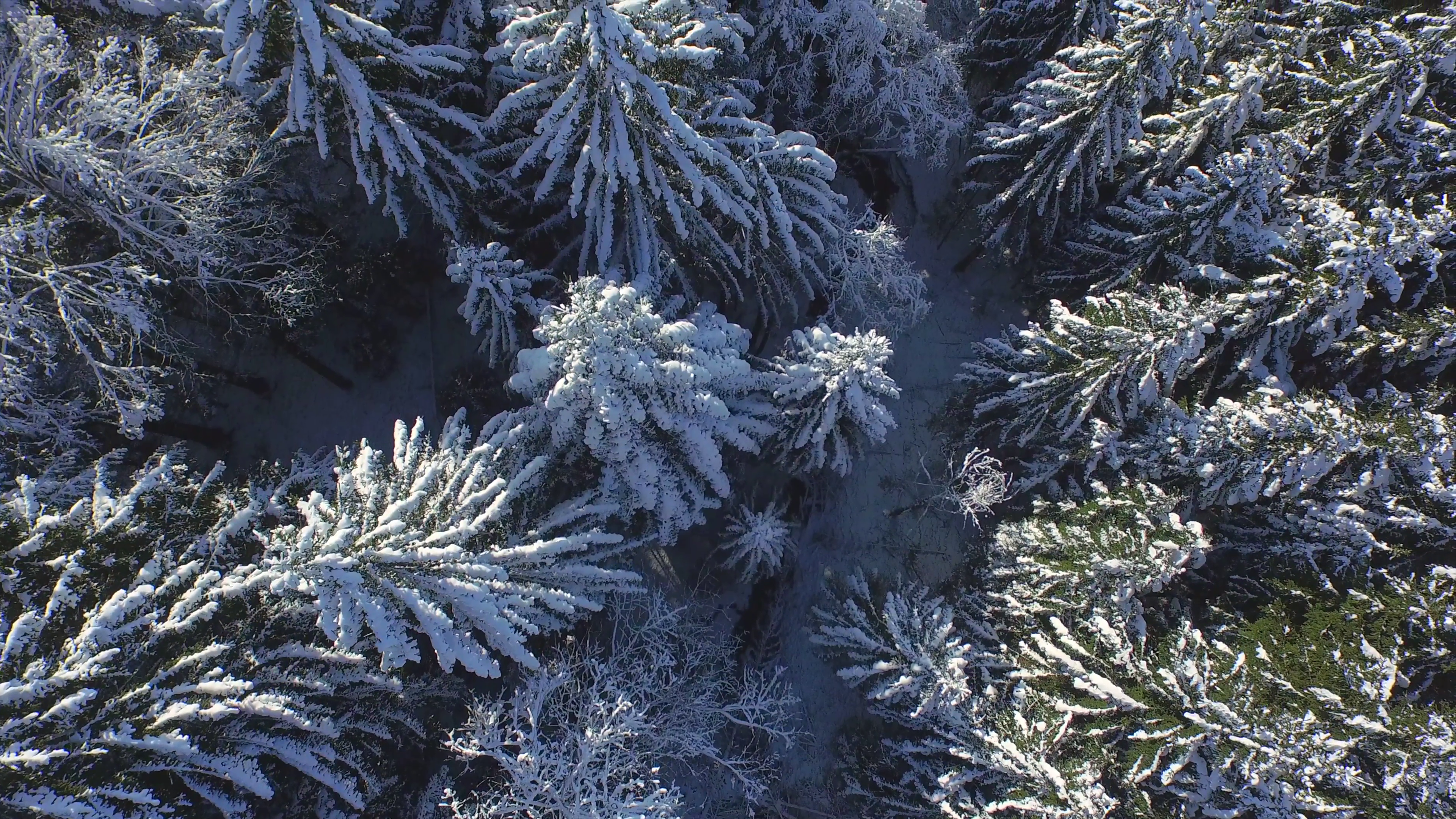 aerial-flying-directly-above-the-snowy-pine-forest-in-winter_e1rf5_kl__F0000.png (3840×2160)