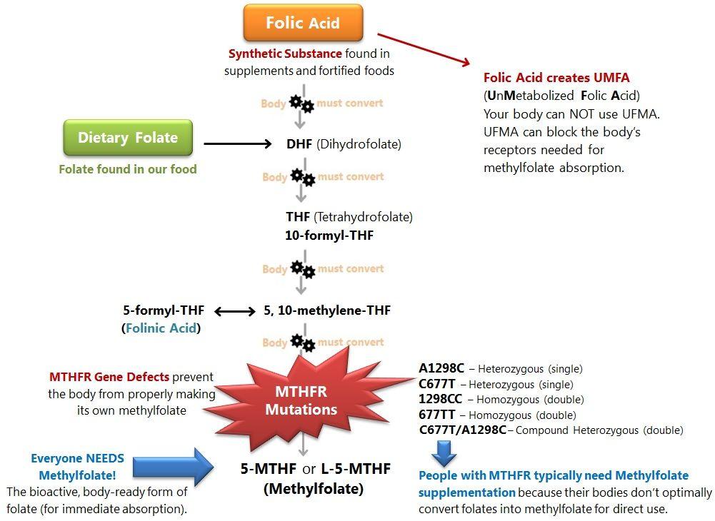 Image result for mthfr symptoms