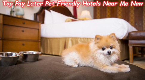 Top Pay Later Pet Friendly Hotels Near Me Now Petfriendlyhotels