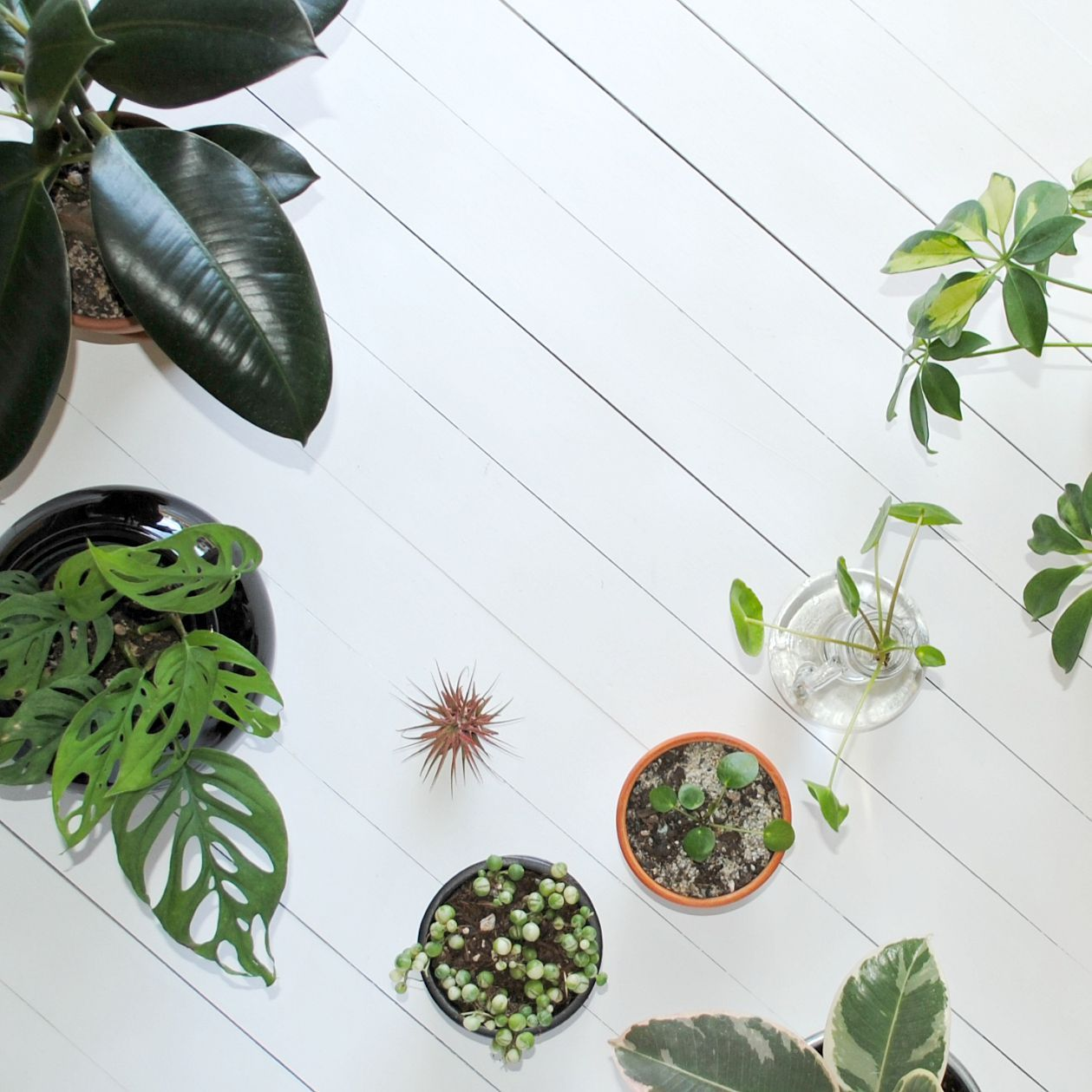 Best Houseplant Care Tips House plant care, House plants