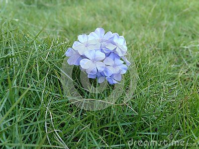 Grass and flowers background High Resolution This Picture Shows Beautiful Background Image With Grass And Flowers In Blue Color Nice Background Pinterest This Picture Shows Beautiful Background Image With Grass And Flowers