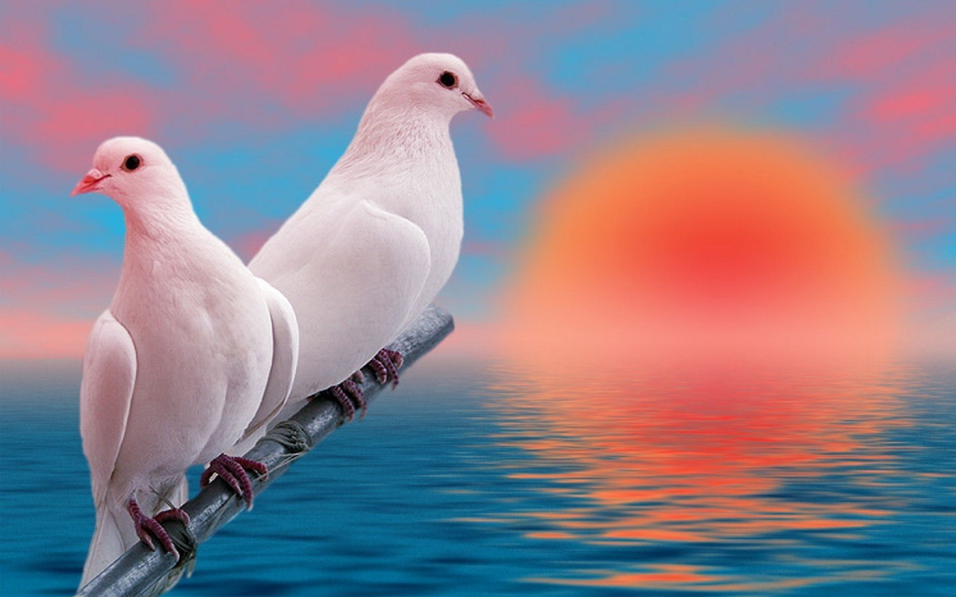 10 New Beautiful Wallpapers Of Love Birds Full Hd 1920 1080 For Pc Desktop Birds Wallpaper Hd Bird Wallpaper Love Birds