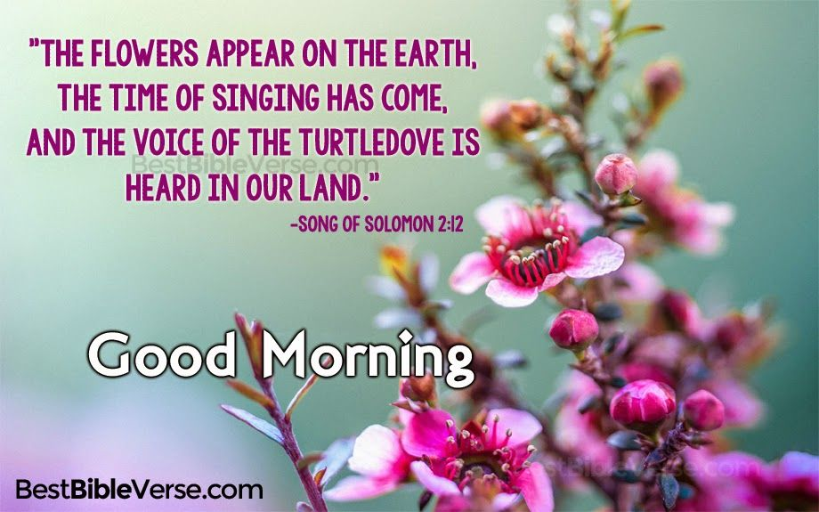 Good Morning Images With Bible Verses In English Best Goodmorning