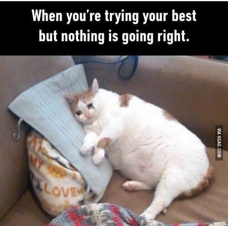fdd07d8e8 When you're trying your best but nothing is going right | lol | Cat ...