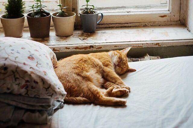Pin Lisaajalta Lalllaa Taulussa Cute Sopot Kissat Kissa Ja Valokuvat
