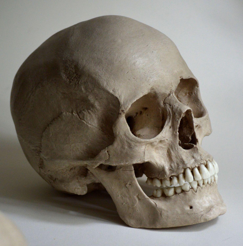 Female Human Skull Replica   Totenkopf illustration, Totenköpfe und ...
