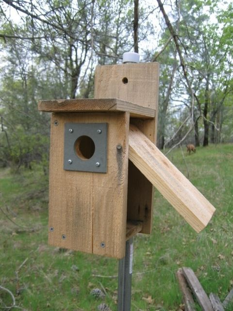 Birdhouse Building Plans Many W Easy Clean Out Features Bird House Bird Houses Nesting Boxes
