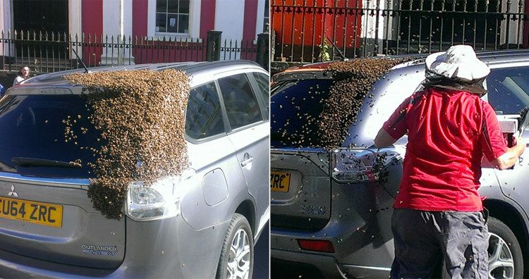 20,000 Bees Chased a Car for 24 Hours to Rescue Their