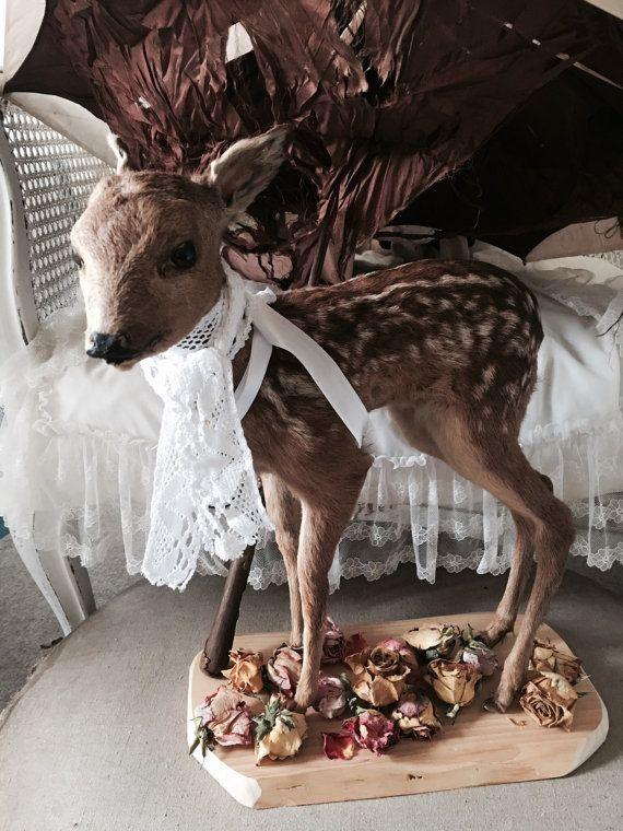 Vintage fawn Bambi Rehkitz stehend Taxidermy von Chambredecoeur