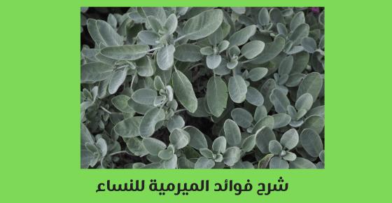 شرح فوائد الميرمية للنساء الحامل والمرضع 2021 برو سايتي In 2021 How To Dry Basil Herbs Plants