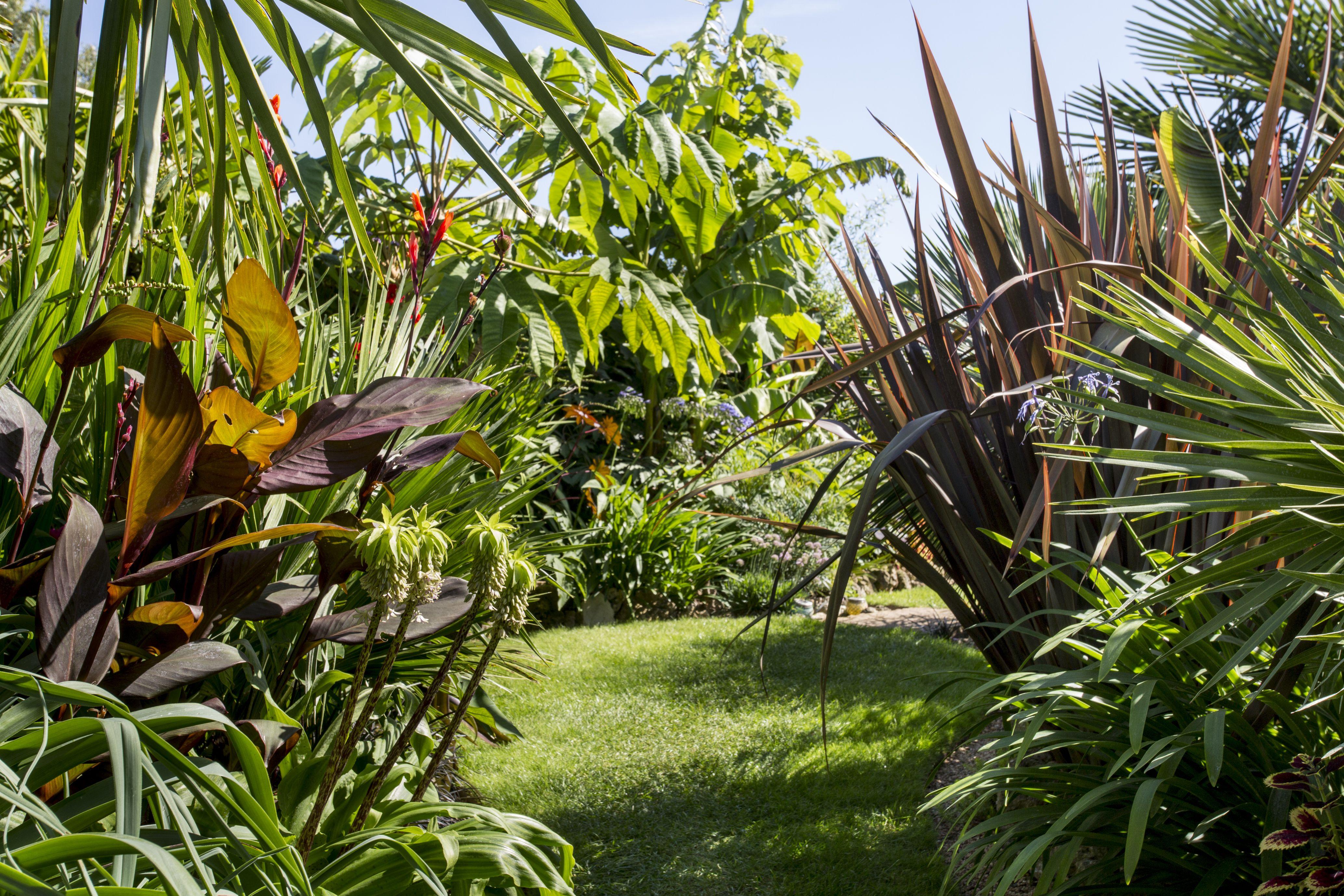 steve moodey tropical hideaway small spaces - Tropical Garden 2016