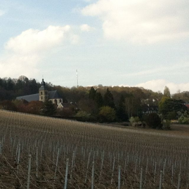Vineyards W A View To Abbey In Hautvillers
