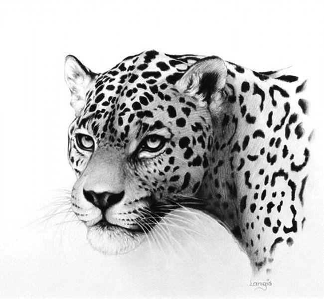 jaguar drawing - photo #27