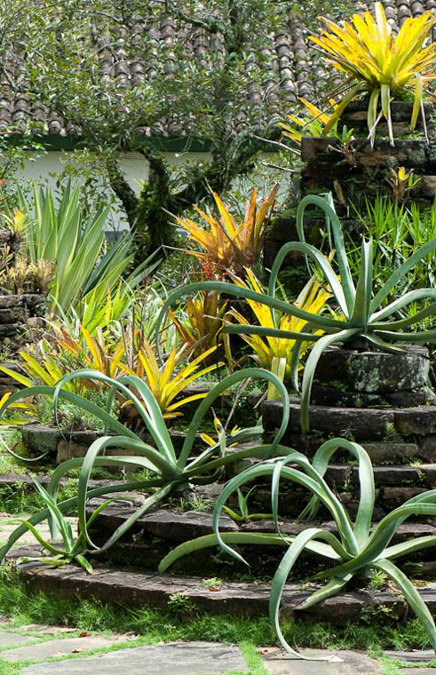 tropical plants of burle marx pdf