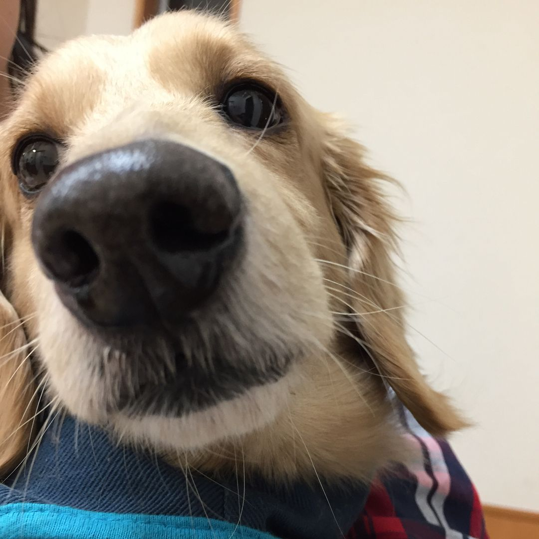Animal Jobs Near Me 2019 Animals, Pets, Pet care