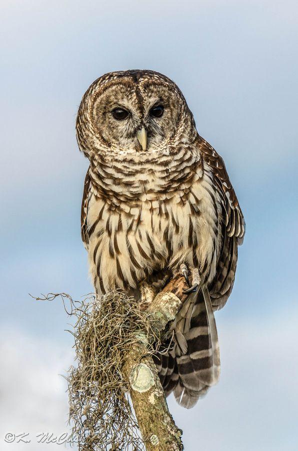 Owls, man.