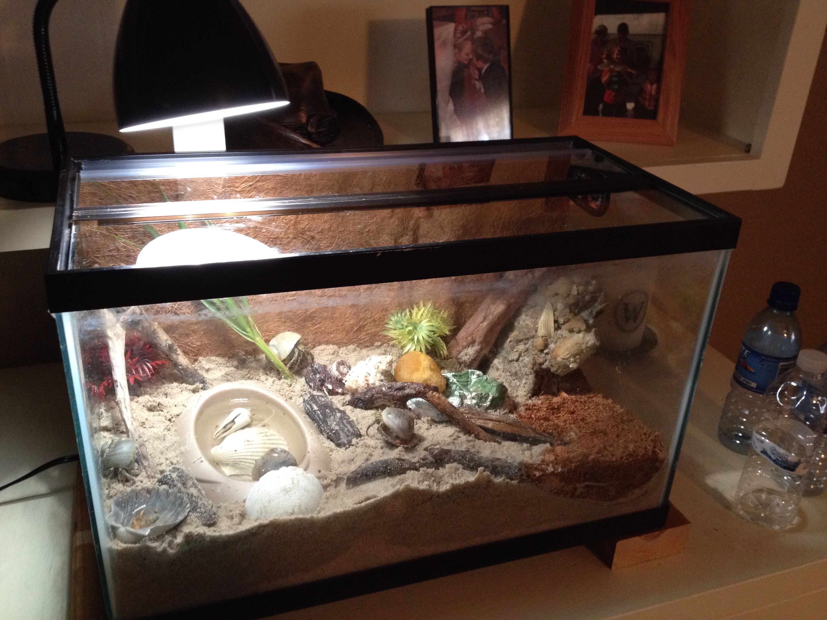 Dyi Wild Hermit Crab Habitat