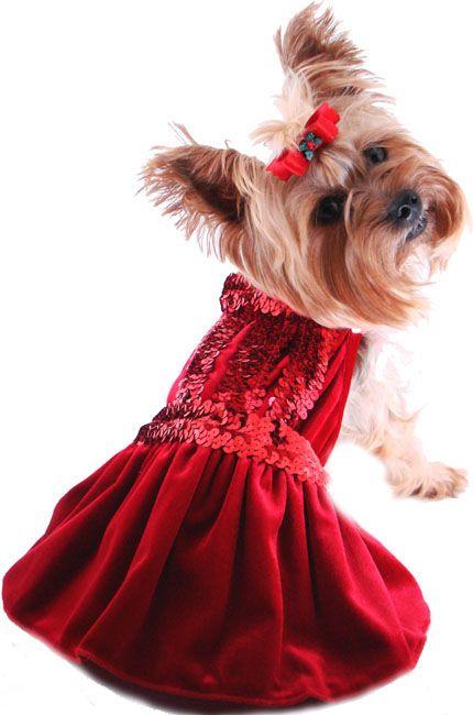 dress+up+pets+for+Christmas | Christmas Dog Dress- Holiday Pet Dresses, Christmas  Puppy Dress - Dress+up+pets+for+Christmas Christmas Dog Dress- Holiday Pet