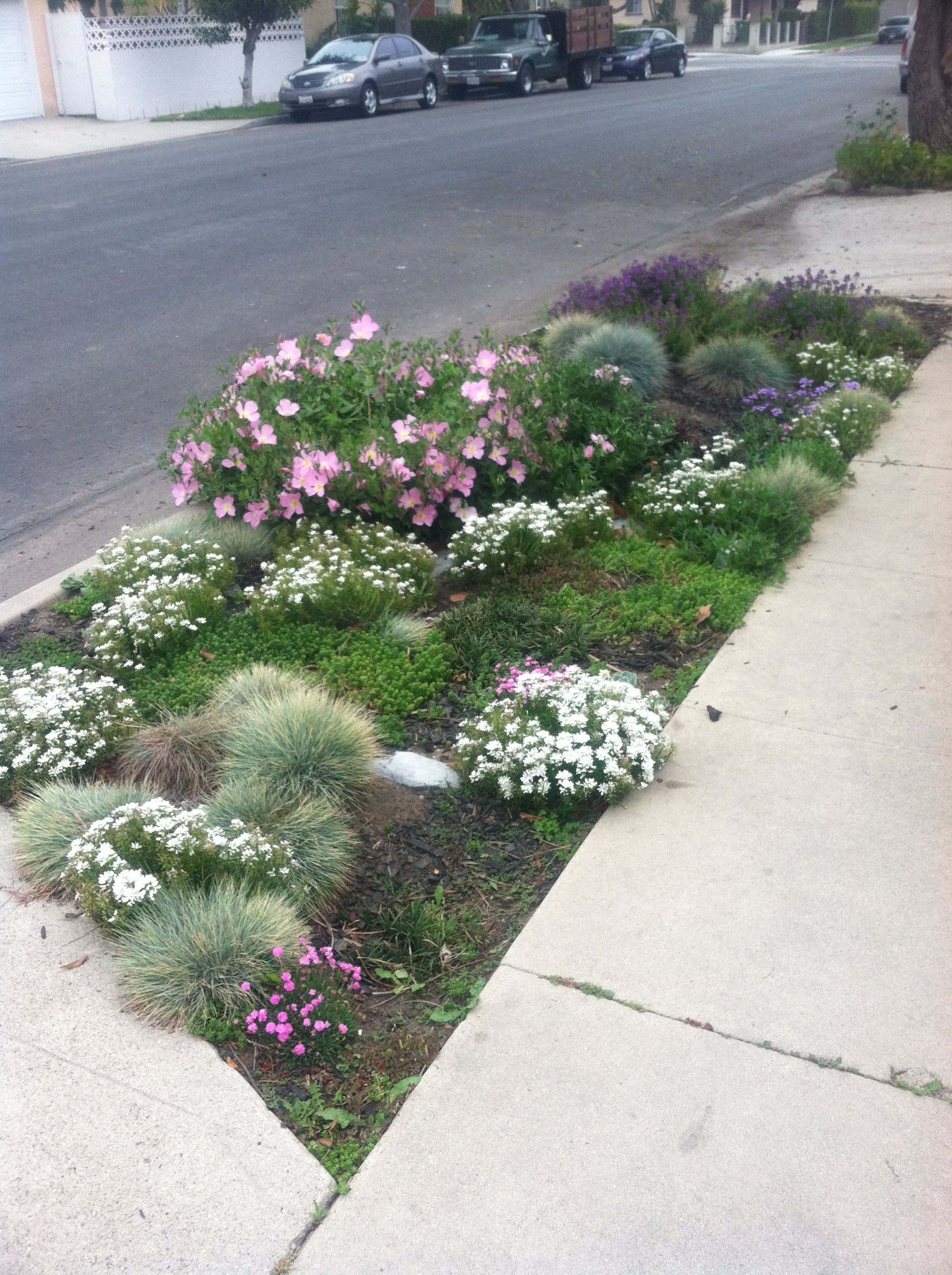 sidewalk landscaping idea using native plants