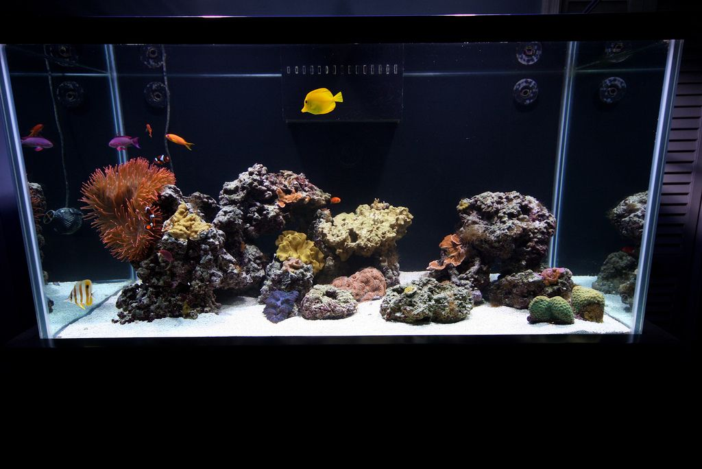 Minimalist Aquascaping - Page 56 - Reef Central Online Community