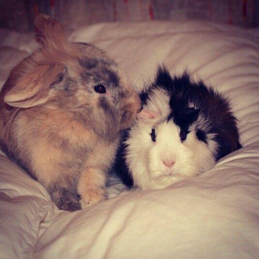Gus y chovo ,mis conejos