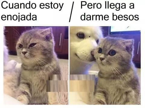 Memesespanol Chistes Humor Memes Risas Videos Argentina Memesespana Colombia Rock Memes Love Funny Animal Pictures Cute Animals Cute Funny Animals