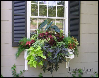 Lovely window box with 'leaves' versus 'flowers' - beautiful.