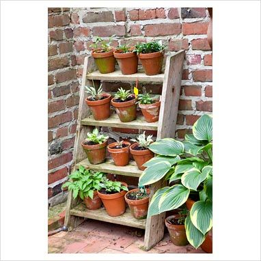 febe77c12069 GAP Photos - Garden & Plant Picture Library - Step ladder plant stand .