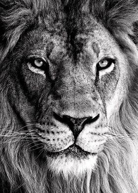 'wild lion face poster ' Metal Poster Print - MK studio   Displate