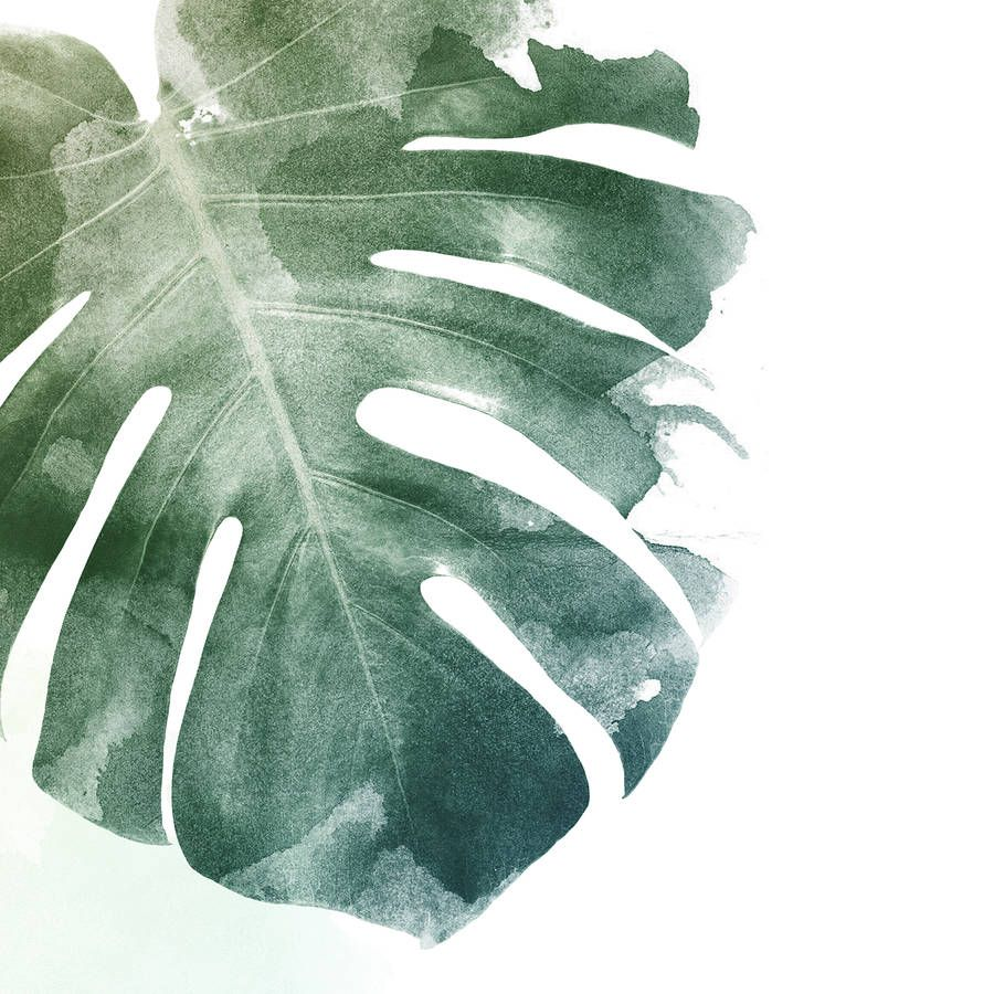 Monstera Leaf Art Print By Georgie St Clair