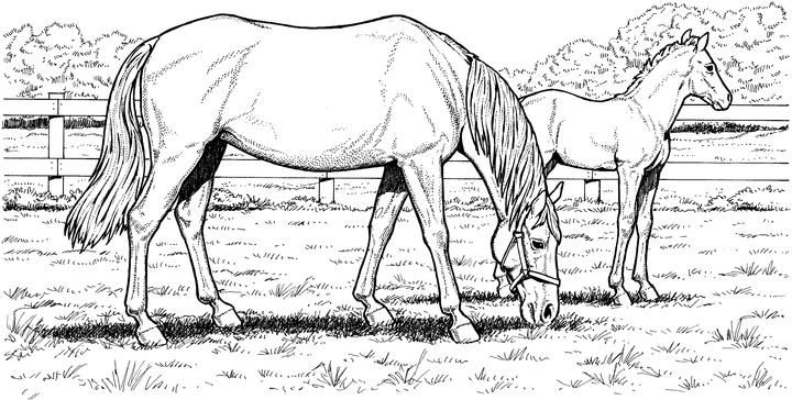 horse coloring pages - Realistic Horse Coloring Pages