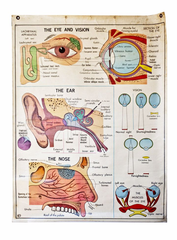 VINTAGE FRENCH MEDICAL / EDUCATIONAL WALL CHART Science and