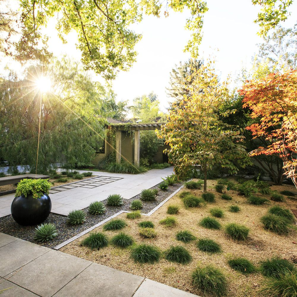 Minimalist Garden, Low Water