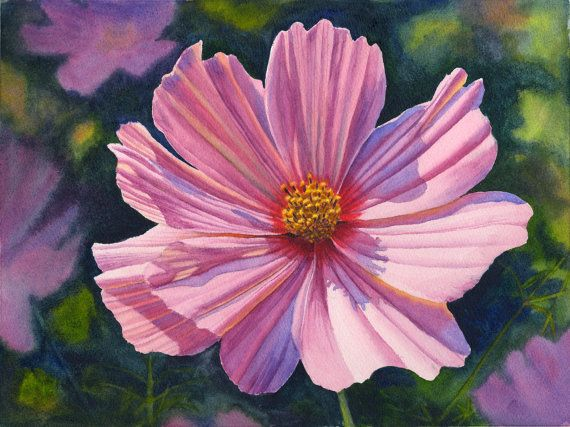 Original Watercolor Painting Pink Cosmos By Cathy Hillegas