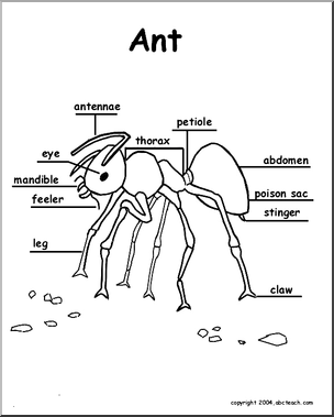 Ant Diagram Labelled