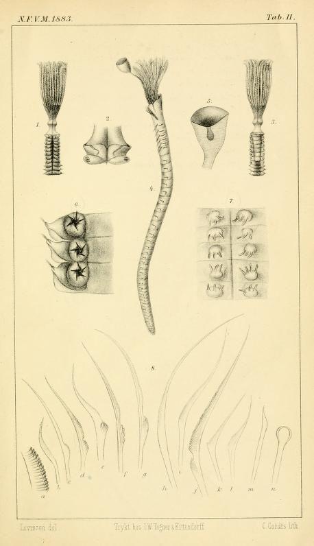 Systematisk-geografisk oversigt over den nordiske Annulata, Gephyrea, Chætognathi og Balanoglossi / - Biodiversity Heritage Library